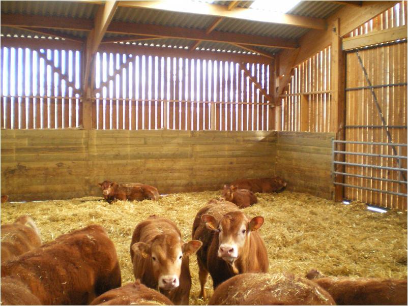 Batiment agricole ovin en bois de douglas de 1080 m2 dans la Vienne une réalisation Fabrice  # Batiment Bois Agricole